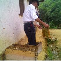 蜂蜜黄先生