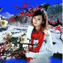 雪中梅20999