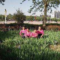 藁城紫荆花