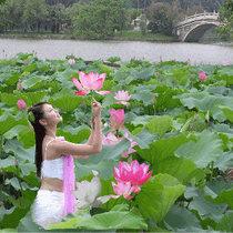 武汉:蝴蝶兰