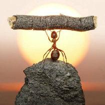 蚂蚁PK大象