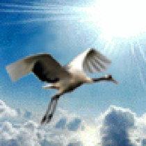 鹤舞视频云天视频_鹤舞专辑松鼠视频、荒野分全集v视频云天滑翔伞有什么用图片