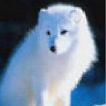 千岛湖银狐太极
